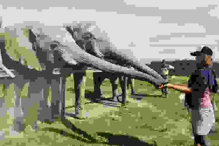 Серф-йога тур по ЮАР